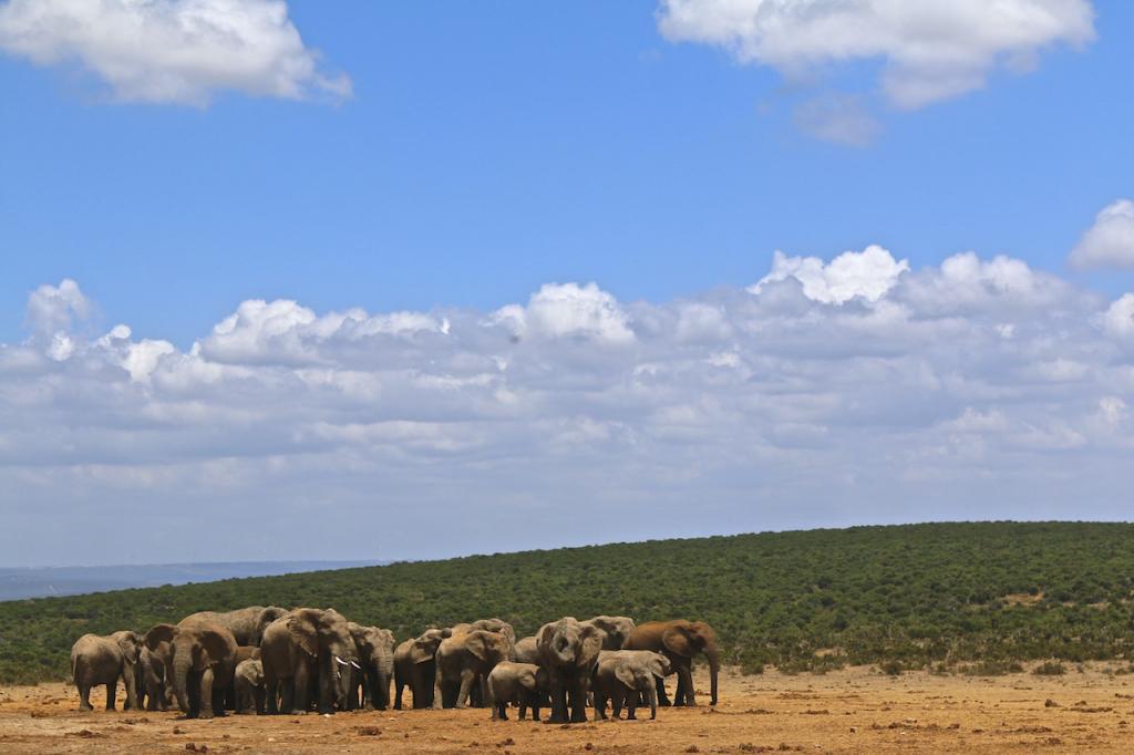 Roteiro Garden Route: Addo Elephant National Park