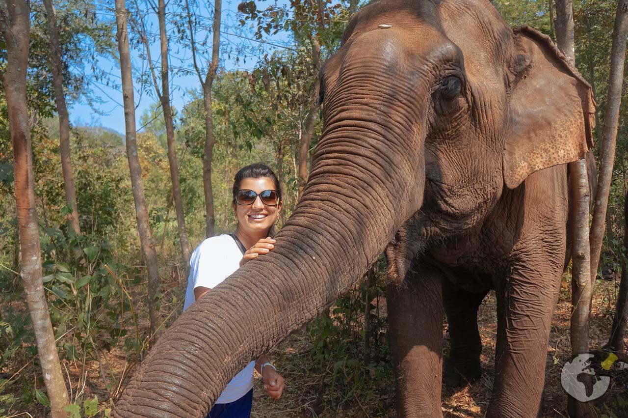 O que fazer em Chiang Mai_elephant