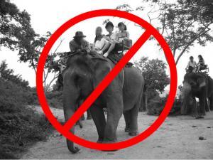 o que fazer em chiang mai_nao subir em elefantes