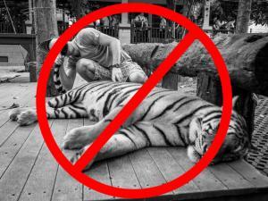 o que fazer em chiang mai_nao visitar tigres