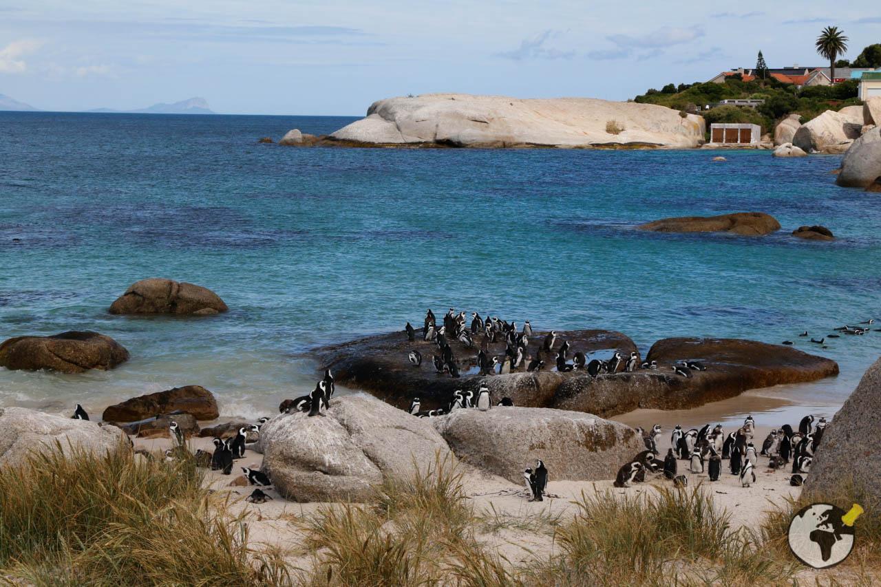 Praias em Cape Town - Blouders Beach