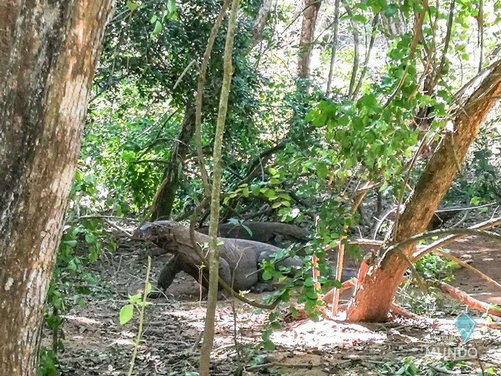 Komodo - Indonesia