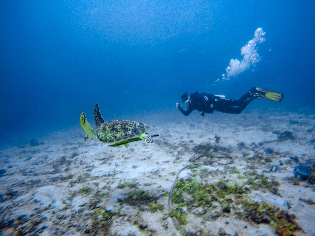 Bohol Filipinas - Mergulho Tartaruga