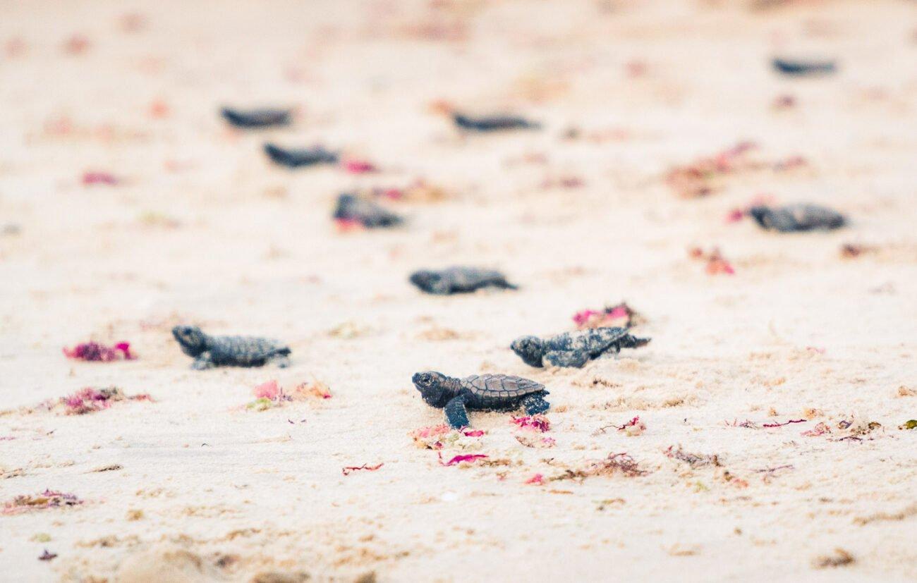 O que fazer em Pipa - Praia do Madeiro + Tartarugas-9