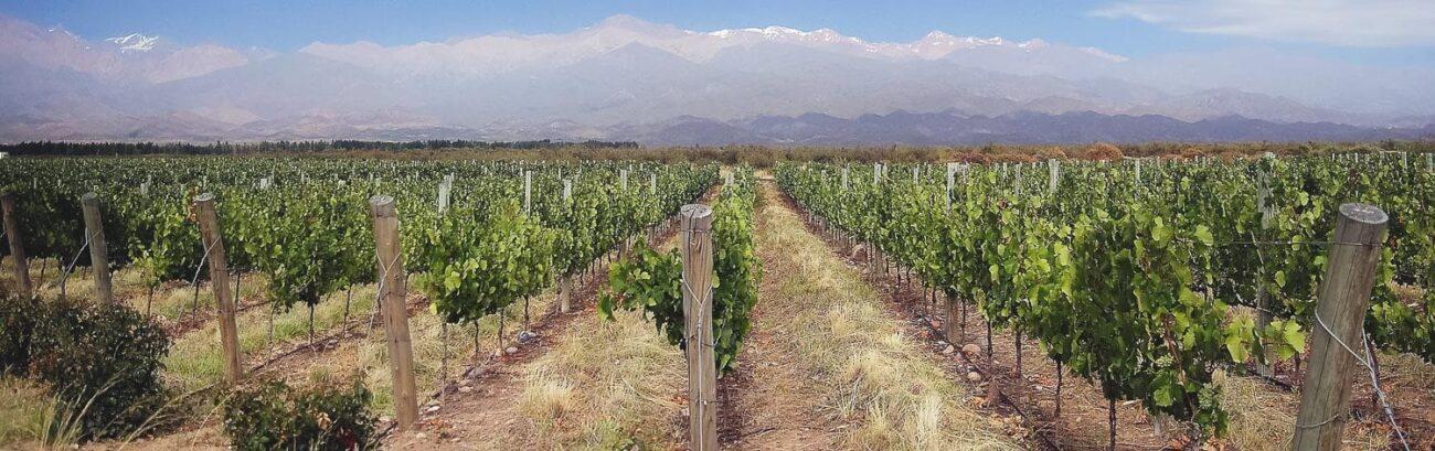 O que fazer em Mendoza Argentina