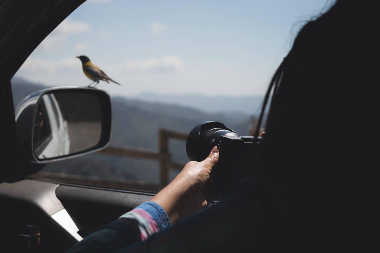 O que fazer em Mendoza Argentina - Pássaro