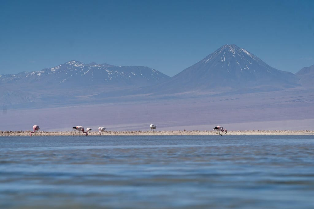 Deserto do Atacama Chile - Foto de cinco flamingos se alimentando na Laguna Chaxa com o vulcão Lincancabur ao fundo
