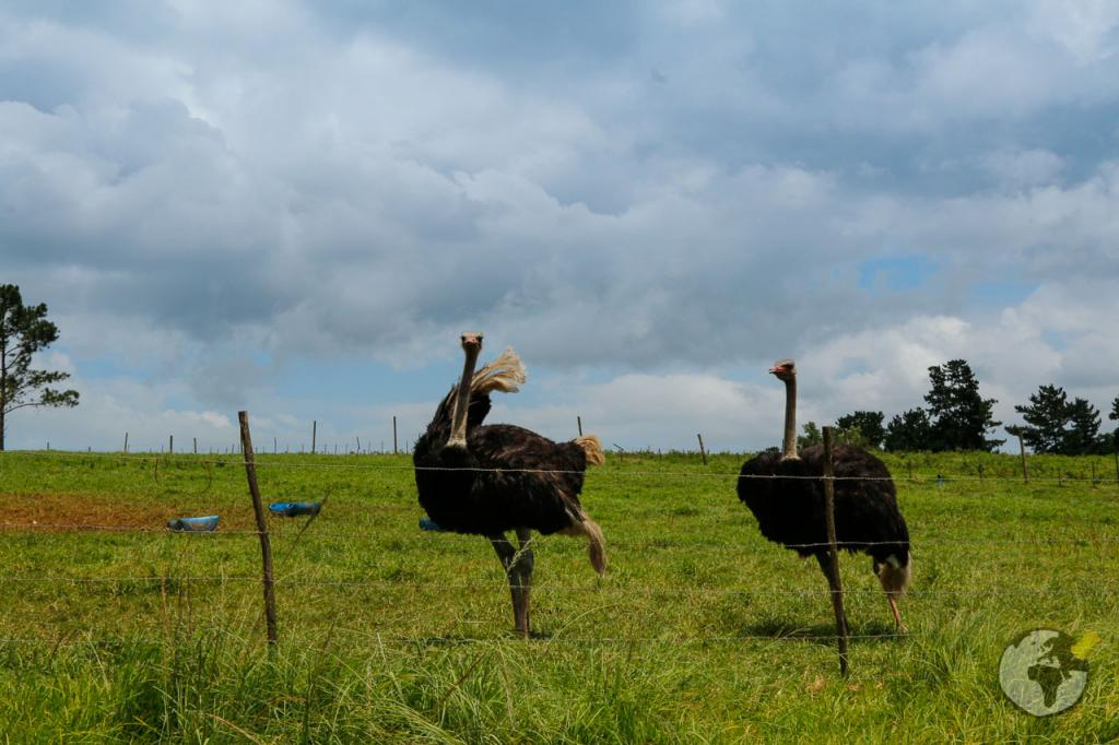 Roteiro Garden Route: Oudtshoorn