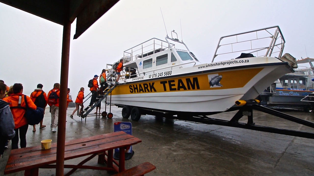 Mergulho com tubarão branco - Barco