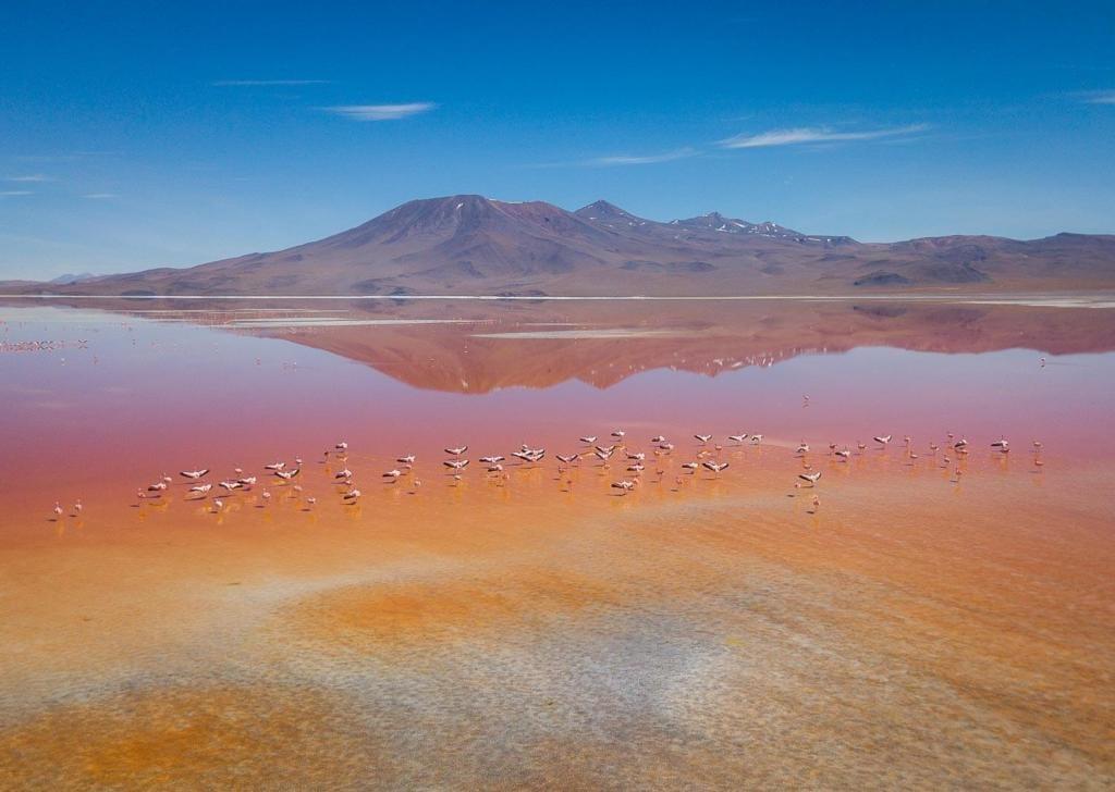 Salar de Uyuni - Foto aéra da Laguna Colorada com Flamingos voando