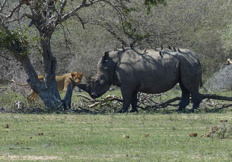 Viagem para África do Sul - Kruger