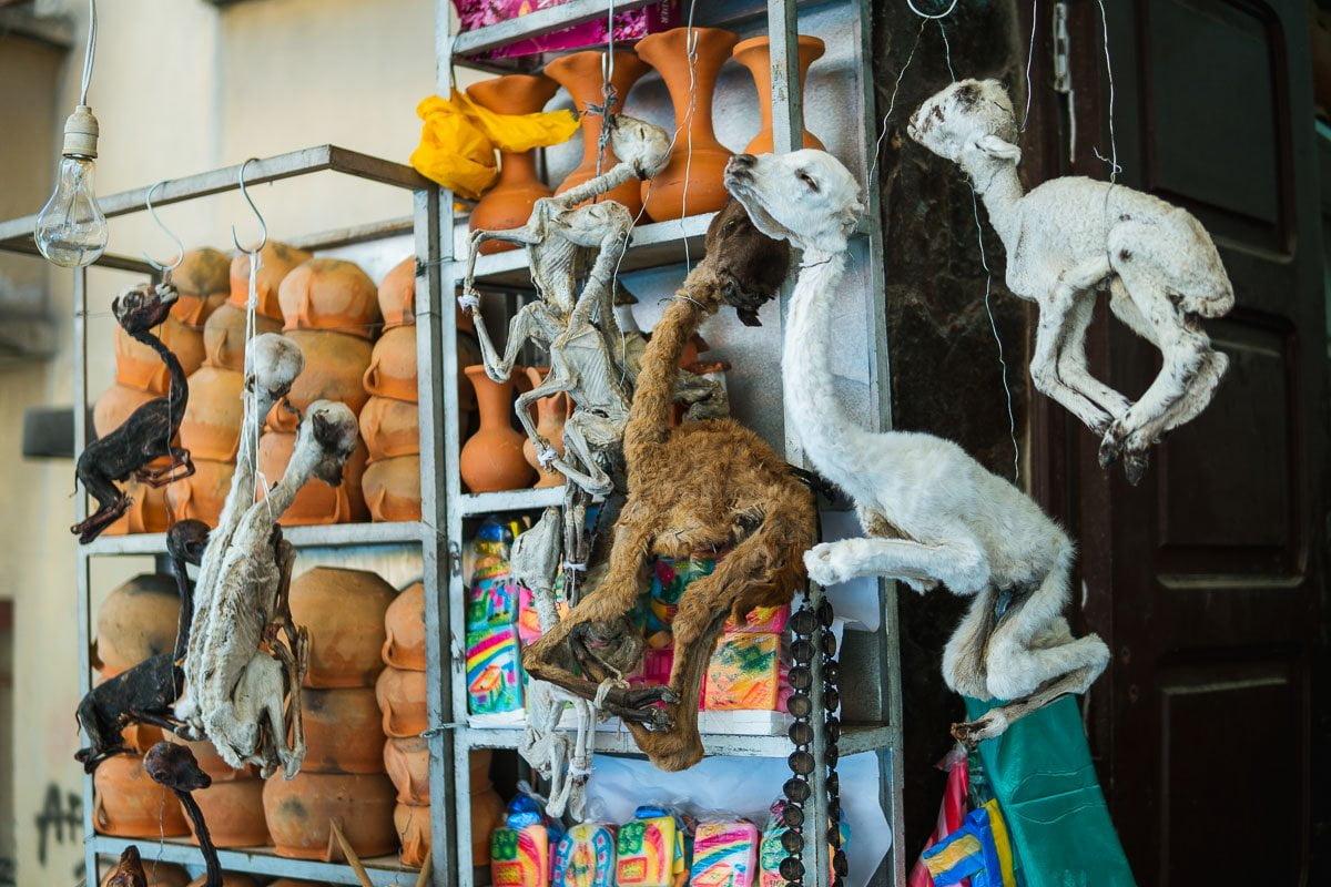 Viagem para Bolívia - Feto de lhama