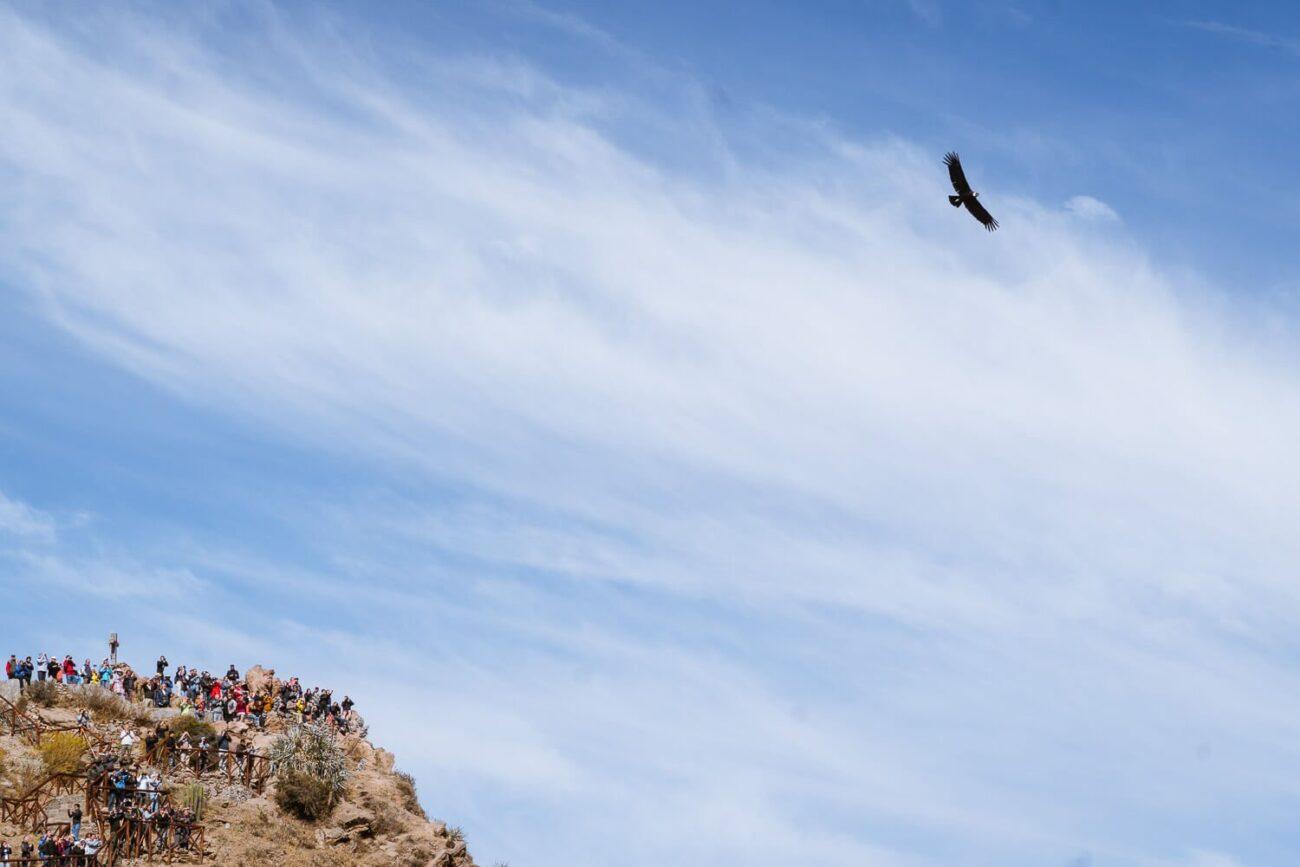 Viagem para o Peru - Condor