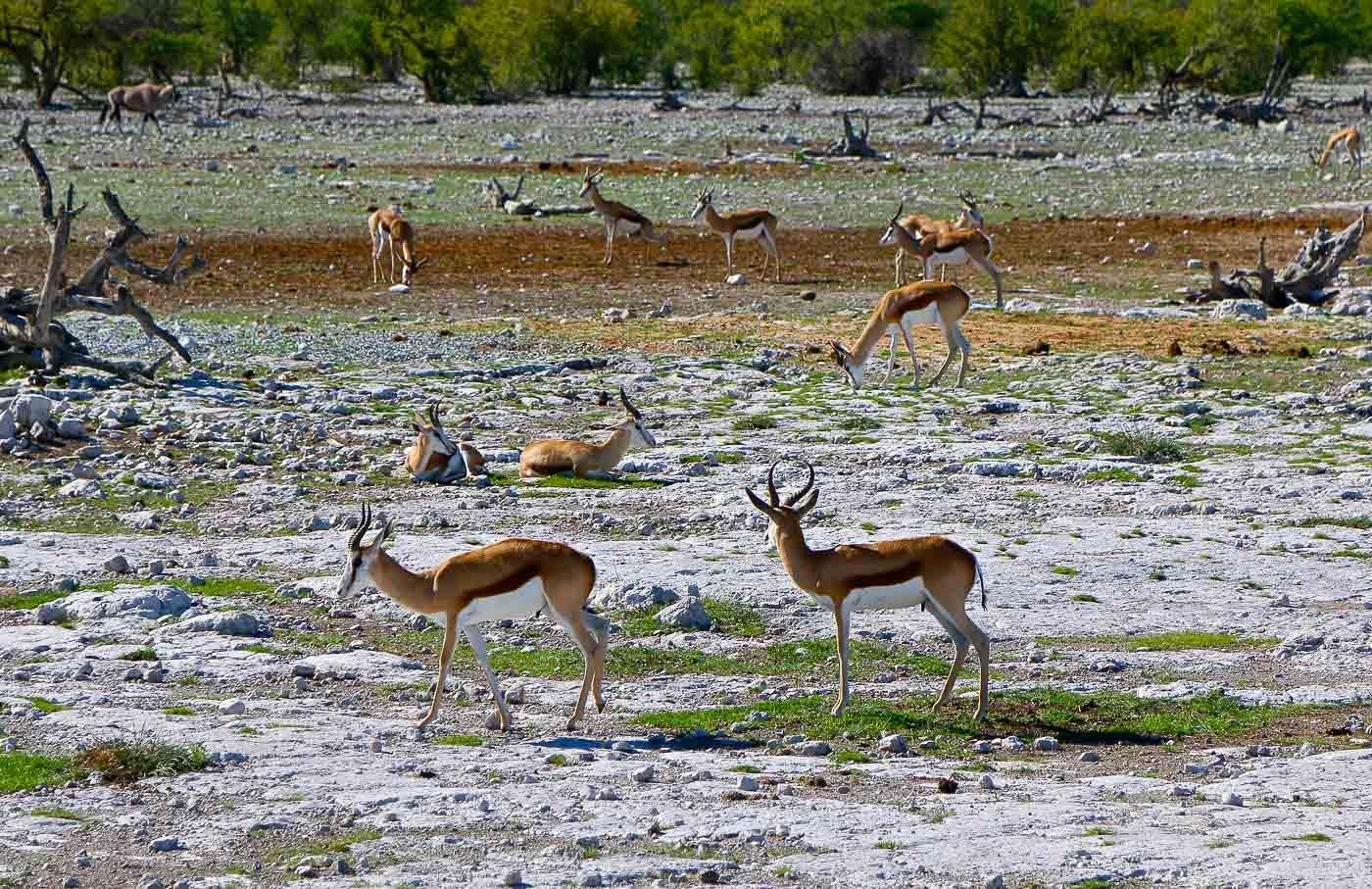 Viagem para Moçambique - Safari