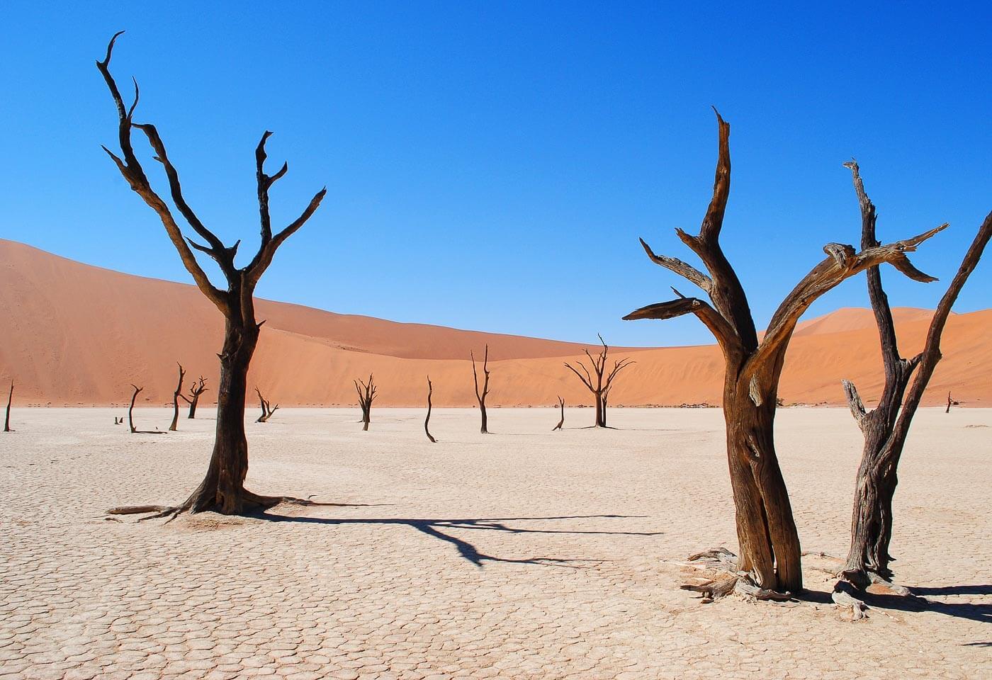 Turismo na Namíbia - Dead Vlei