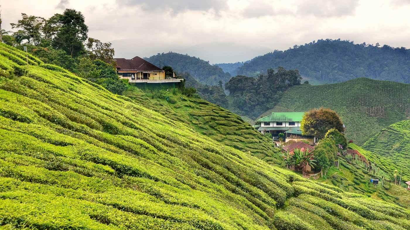 Turismo na Malásia - Plantação de Chá