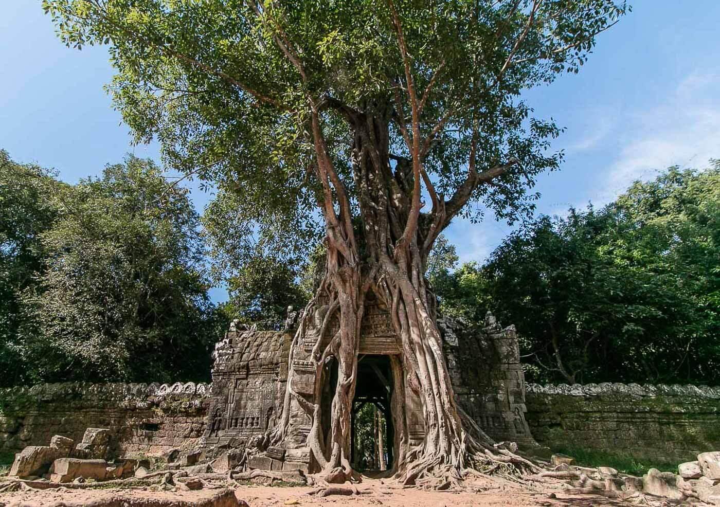 Viagem para o Camboja - Árvore engole uma estrutura