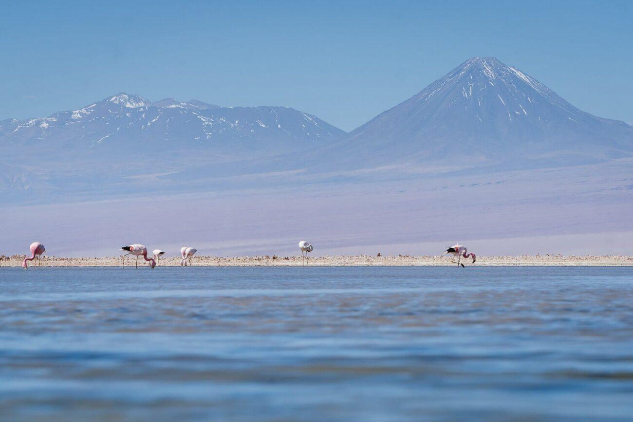 Flamingos na laguna Chaxa com o Vulcão Lincancabur ao Fundo- Lagunas Altiplanicas Piedras Rojas Salar do Atacama Laguna Chaxa