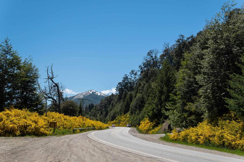 Estrada com Árvores amarelas no outono - O que fazer em Villa la Angostura