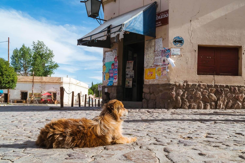 O que fazer em Jujuy - cachorro deitado no paralelepípedo