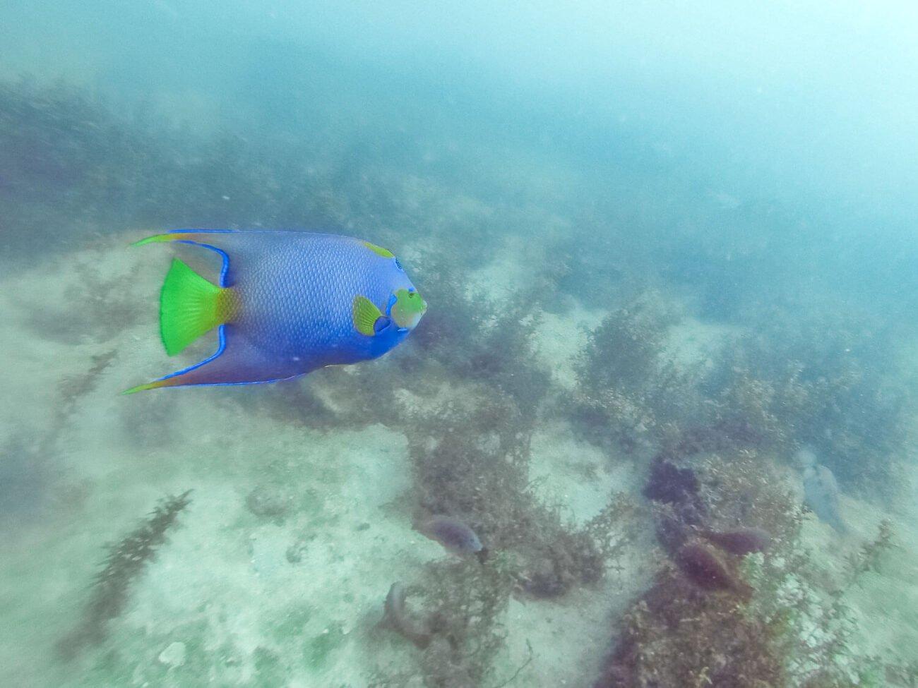 Mergulho em Arraial do Cabo - Ciliares