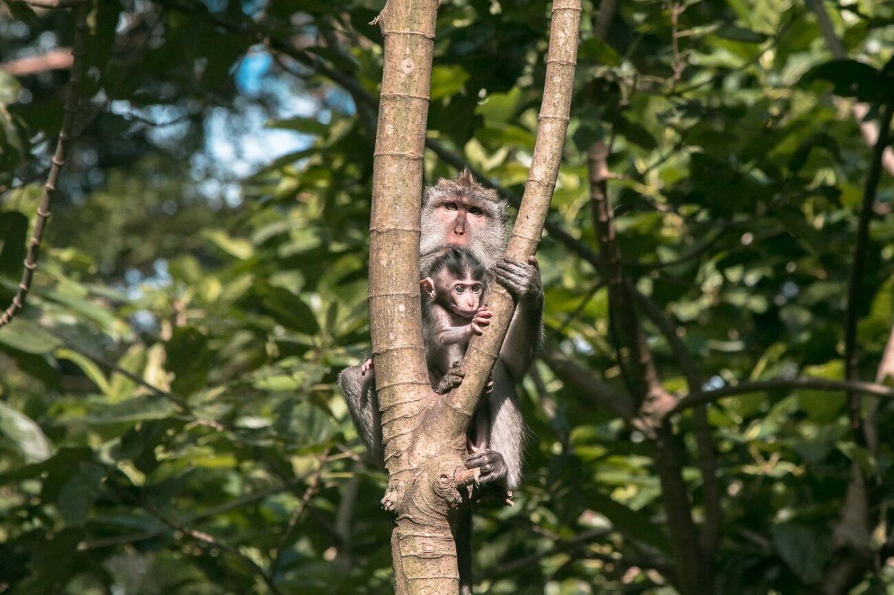 O que fazer em Bali - Monkey Forest