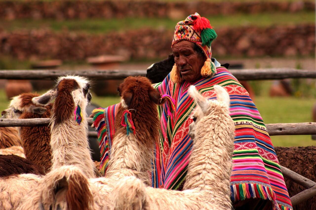 Seguro Viagem América do Sul - Lhamas