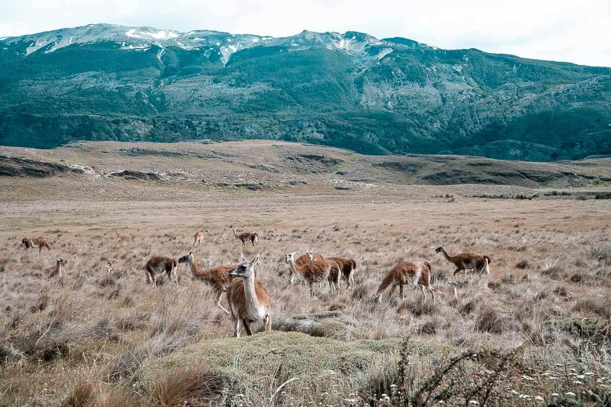 Carretera Austral Chile - Parque Patagônia