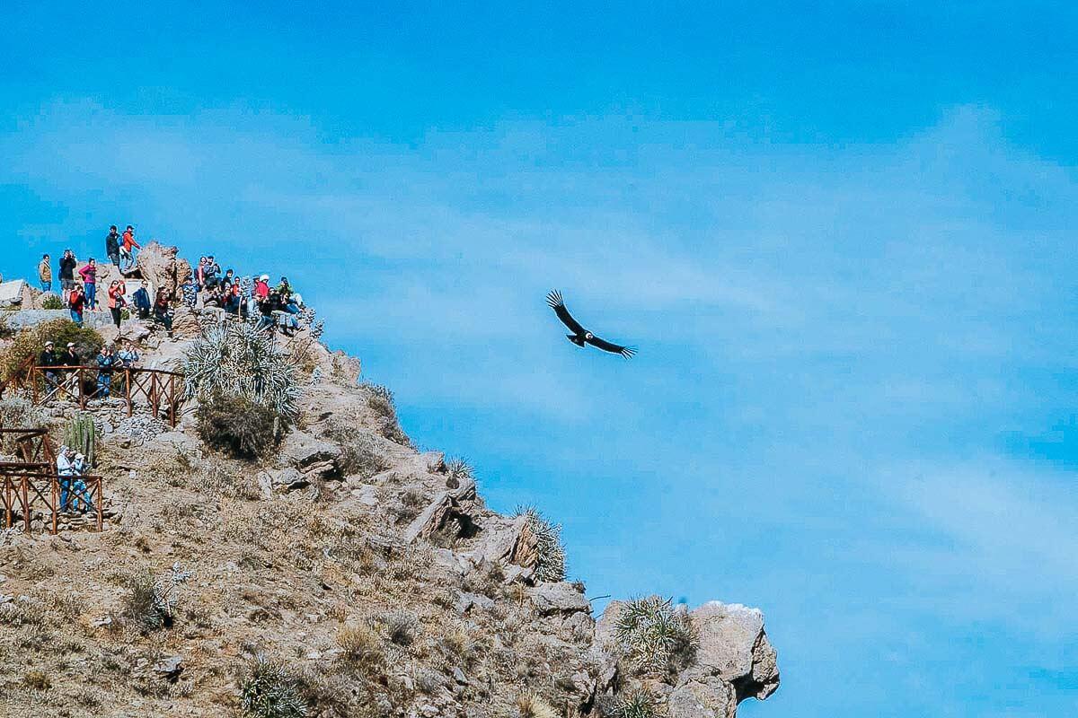 Roteiro Peru - O que fazer no Peru - Colca Canyon